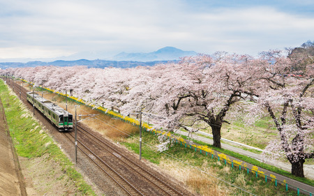 Photo for Cherry blossoms or Sakura and local train - Royalty Free Image