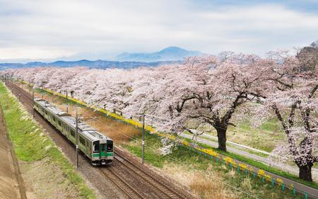 Foto per Cherry blossoms or Sakura and train - Immagine Royalty Free
