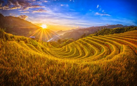 Photo for Rice fields on terraced with wooden pavilion at sunset in Mu Cang Chai, YenBai, Vietnam. - Royalty Free Image