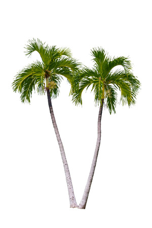 Photo for Palm tree isolated on white background. - Royalty Free Image