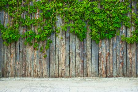 Foto de Green leaf on the wooden fence. Nice to use as background. - Imagen libre de derechos