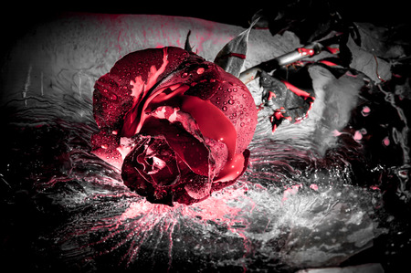 Photo for dramatic close up of a red rose on ice - Royalty Free Image