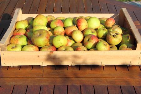 Photo pour Crate of apples - image libre de droit