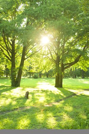 Photo pour Park sunlight - image libre de droit