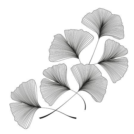 Ilustración de Ginkgo biloba leaves - Imagen libre de derechos