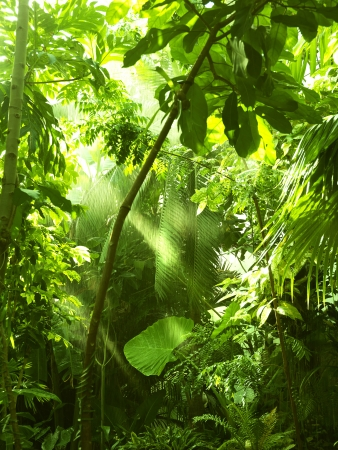 Photo for Tropical forest, trees in sunlight and rain - Royalty Free Image