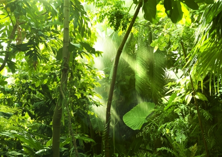 Tropical forest trees in sunlight and rain mural