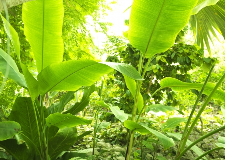Photo for Tropical forest, trees and leafs in sunlight - Royalty Free Image