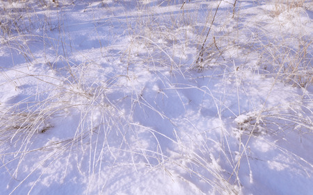 Photo for Frozen grass in sunshine in cold winter - Royalty Free Image