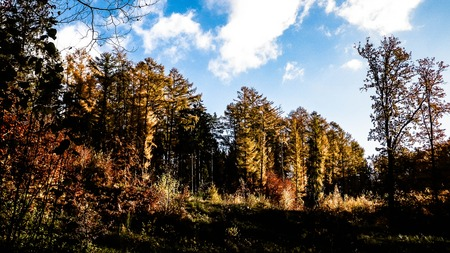 Photo for Beautiful Polish golden autumn. Golden, autumnal trees against blue sky with white clouds. Nature and travel concept. - Royalty Free Image