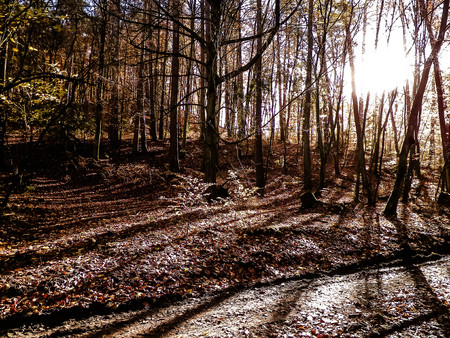 Photo for Autumn forest in sunny day. Golden Polish autumn. Nature concept - Royalty Free Image