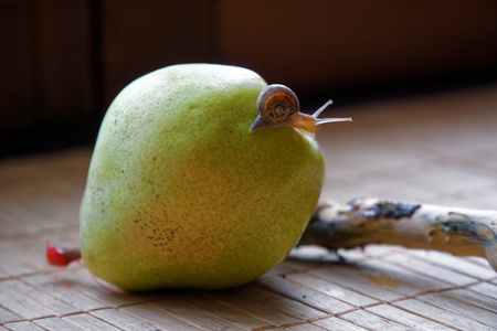 Photo pour Snail sitting on green pear and tree trunk and crawls to broccoli, wooden bamboo backdrop, close-up animal background. - image libre de droit