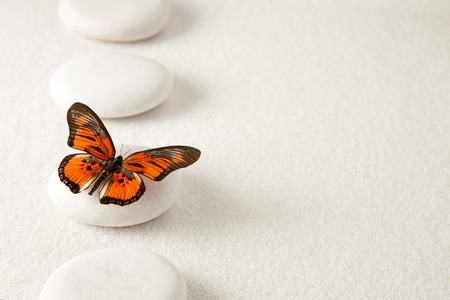 Foto de Background with rocks and butterfly - Imagen libre de derechos