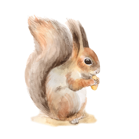 Illustration pour Squirrel with a nut. Hand drawn. Watercolor illustration in vector - image libre de droit