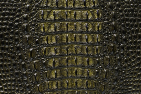 Freshwater crocodile bone skin texture background.