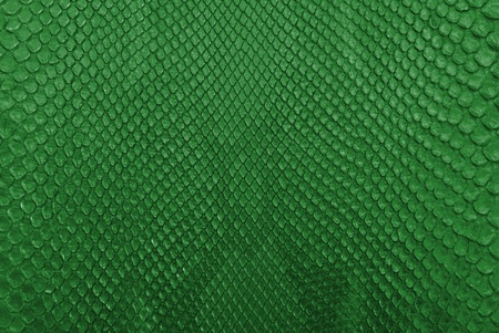 Green python snake skin texture background