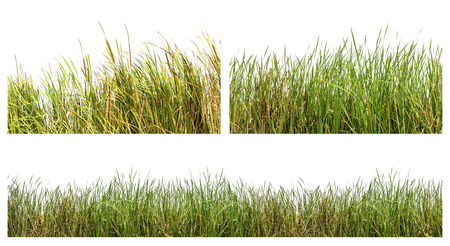 Photo for An isolated image of green color wild grasses on white background - Royalty Free Image