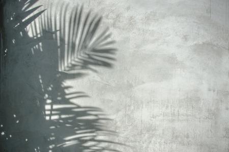 Photo pour An image of palm leaf shadow on the wall - image libre de droit