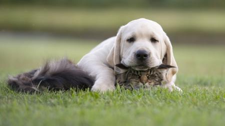 kitten and puppy friendship