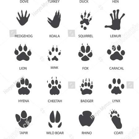 Illustration pour Vector illustration of Set of animal and bird Paw Prints - image libre de droit