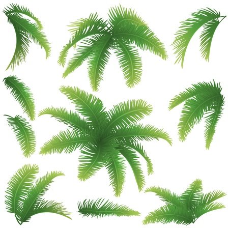 Illustration pour Set green branches with leaves of palm trees on a white background  Drawn from life - image libre de droit