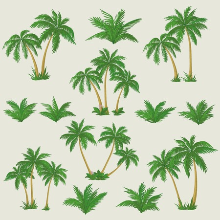 Illustration pour Set tropical palm trees with green leaves, mature and young plants  Vector - image libre de droit