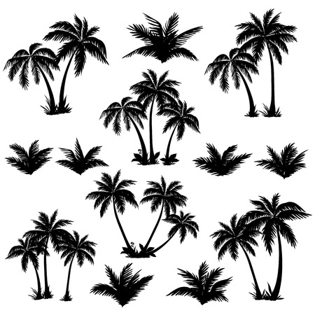Illustration pour Set tropical palm trees with leaves, mature and young plants, black silhouettes isolated on white background  Vector - image libre de droit