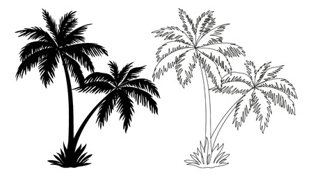 Illustration for Tropical Palm Trees, Black Silhouettes and Outline Contours Isolated on White Background. Vector - Royalty Free Image