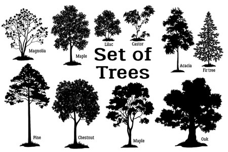 Illustration pour Set Isolated on White Background Silhouettes Spring and Summer Plants, Trees and Bushes, Magnolia, Maple, Lilac, Castor, Acacia, Fir, Pine, Chestnut, Maple, Oak and Grass. Vector - image libre de droit
