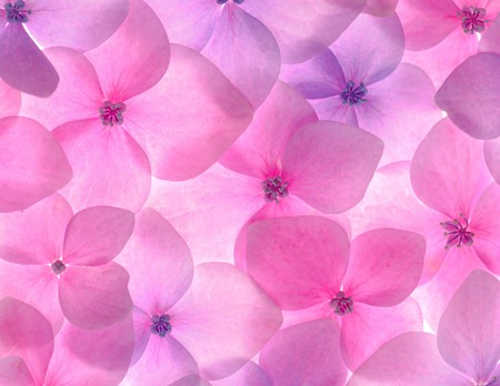 Pink flower background close up. Romantic and love pattern