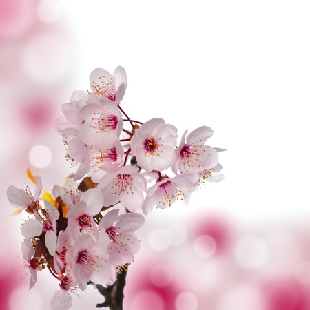 Photo for Apple blossom macro. Shallow deep of field. Focus on flowers. Beautiful bokeh background. - Royalty Free Image