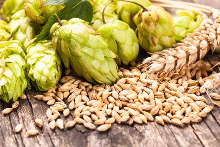 Photo pour Barley and hops on a wooden background. Beer concept - image libre de droit