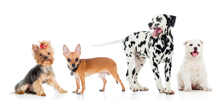 set of pets dogs isolated on white background