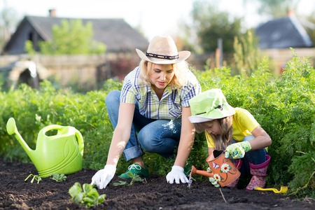 Photo for Woman and child girl, mother and daughter, gardening together planting strawberry plants in the garden - Royalty Free Image