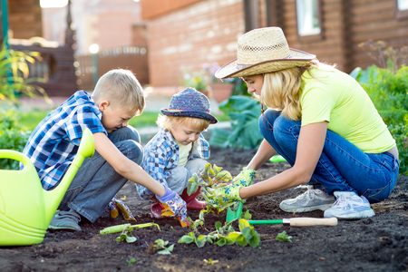 Photo pour Mother and her sons children planting strawberry in home garden - image libre de droit