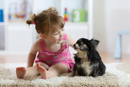 Foto de Child girl with little dog black hairy chihuahua doggy - Imagen libre de derechos