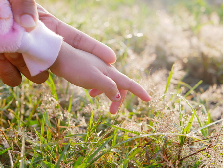 Foto für Little baby's hand in her mother's hand, for the first time, reaching out to touch dew drops on grasses in morning sunlight - mother supports and helps her child to have courage to explore new things in life - Lizenzfreies Bild