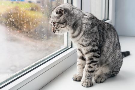 Foto de cat sits on a windowsill and looking out the window - Imagen libre de derechos