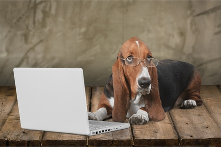 Photo for Dog, Computer, Pets. - Royalty Free Image