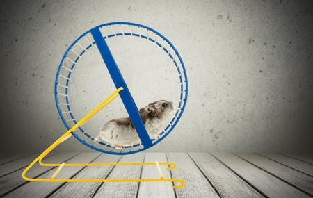 Photo for Hamster, Wheel, Pets. - Royalty Free Image