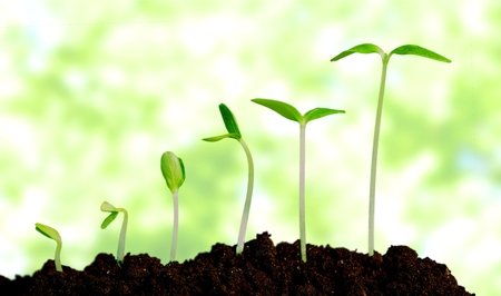 Photo for Grow, growing, plant. - Royalty Free Image