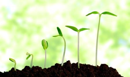 Foto de Grow, growing, plant. - Imagen libre de derechos
