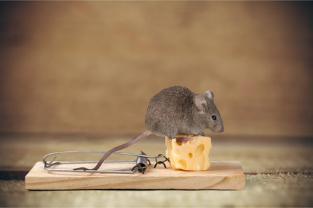 Photo for Mouse trap. - Royalty Free Image