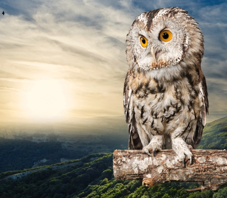 Photo for Owl. - Royalty Free Image