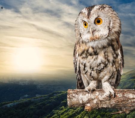 Photo pour Owl. - image libre de droit