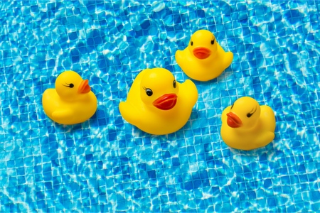 Photo for Rubber duck. - Royalty Free Image