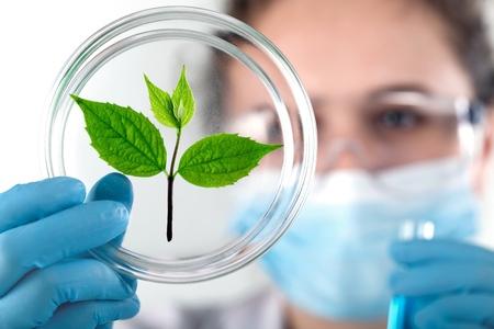 Foto de A scientist in a laboratory. - Imagen libre de derechos