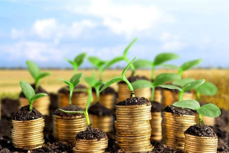 Photo pour Coins in soil with young plants on blurred background - image libre de droit