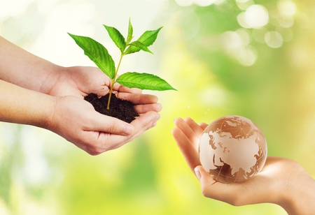 Photo pour Two people human hands holding/ saving growing big tree on soil eco bio globe in clean CSR ESG natural background: World environment day go green concept: - image libre de droit