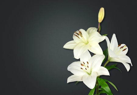 Photo for Lily flower on the dark background. Condolence card. Empty place for a text. - Royalty Free Image